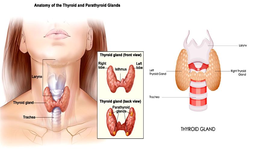 Thyroid Lobectomy Surgery In Dubai Weight Loss Surgery Hernia